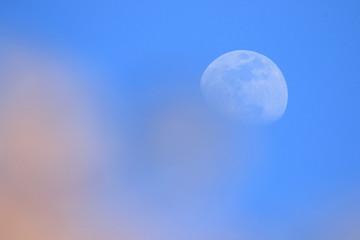 月とサクラ