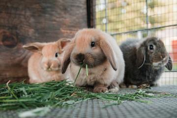 Cute bunnie eating grass.