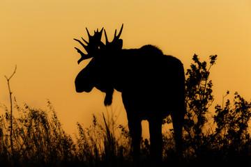 Moose Silouette