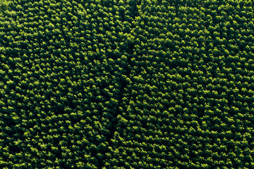Aerial view of a natural deciduous forest, Spain