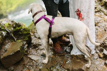 Labrador Retriever on Hike with Couple