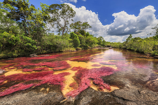 Cano Cristales (River of five colors), La Macarena, Meta, Colombia