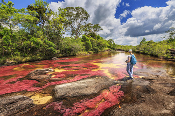Foto op Aluminium Zuid-Amerika land Cano Cristales (River of five colors), La Macarena, Meta, Colombia