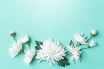 white chrysanthemum on green background with copy space for text in top view