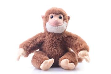 Monkey on a white background