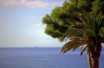 Palm tree and pine on the beach. Beautiful seascape