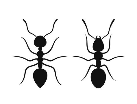 Ant silhouette. Isolated ants on white background