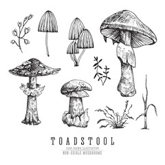 Toadstool and fly agaric, very dangerous non-edible poisonous forest mushrooms sketch vector illustration isolated.