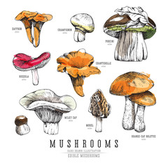 Forest types of mushrooms colorful collection, edible boletus in retro sketch vector style. All elements isolated, watercolor imitation.