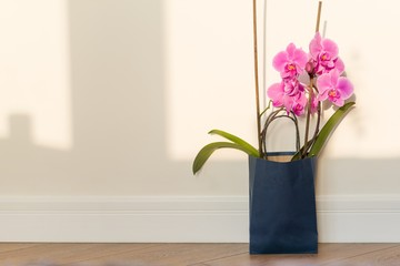 Flowers surprise in the gift bag. Pink orchid indoors on the floor, background light solar wall, copy space