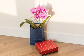 Surprise gift and flowers. Pink orchid and gift box indoors on the floor, background light solar wall, copy space.