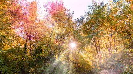 Forêt en automne