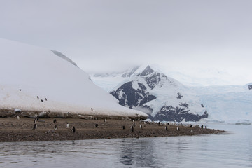 Antarctic seascape with ice