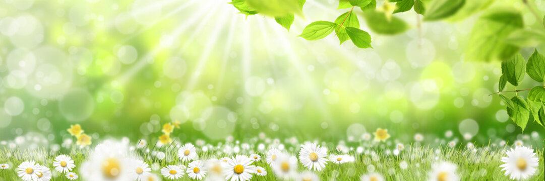 Frühling 427