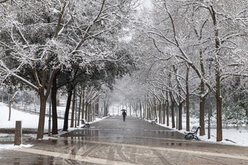 Lonely man walking in the park during an unusual snowstorm in Terrassa, Spain.