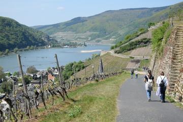 Fototapete - Wanderweg bei Assmannshausen