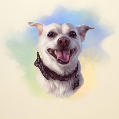 Russian toy terrier is a mini dog. Cute puppy with the bow tie on watercolor background. Watercolor Animal collection: Dogs. Dog Pug Portrait - Hand Painted Illustration of Pet. Good for banner, card