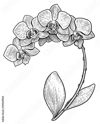 Orchid Flower Line Drawing : Orchid flower line drawing life style by modernstork