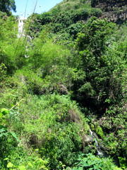 La Reunion: Lush vegetation on the bank of the rivulet below the Bassin des Aigrettes in the Ravine Saint-Gilles