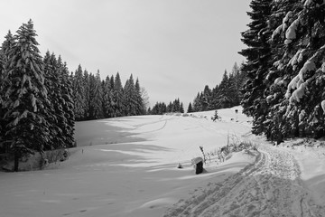 melancholic black and white photo of landscape with a meadow and spruce trees covered with snow and a path in winter