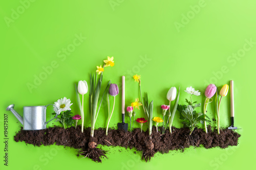 Spring flower bed background stock photo and royalty free images on spring flower bed background mightylinksfo