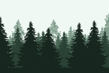 Green coniferous forest with grass - realistic vector