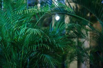 Tropical Fern Bushes