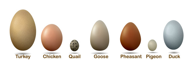 set of different birds eggs with insctiption, turkey, duck, goose, chicken, pigeon, quail, pheasant eggs,