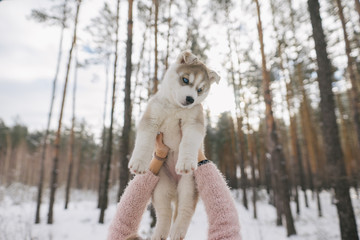 cropped shot of woman holding husky puppy in winter forest