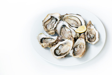 Oysters. Raw fresh oysters with lemon are on white round plate, image isolated, with soft focus. Restaurant delicacy.