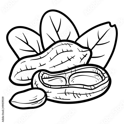 coloring book peanut stock image and royalty free vector files on