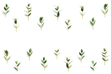 Background With Green Leaves on White Background