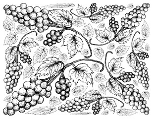Berry Fruits, Illustration Wallpaper Background of Hand Drawn Sketch Bunch of Fresh Juicy Assyrtiko or Asyrtiko Grapes.
