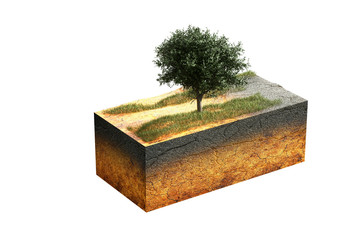 3d rendering illustration of cross section of cube of the earth and tree in the field