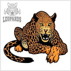 Leopard - vector isolated illustration on white