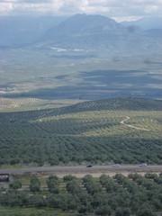 Paisaje de campos  en Baeza, ciudad de Jaen en Andalucia, España declarada Patrimonio de la Humanidad por la Unesco