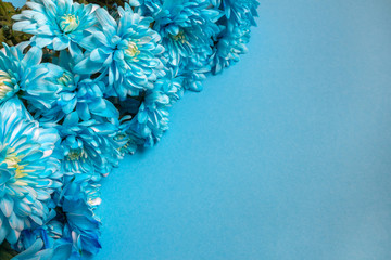 Set of blue  flowers in a chrysanthemum pattern in a background frame, a concept of a Valentine's day holiday and spring