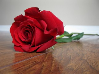 Close up of red rose on wooden floor with neutral wall in background