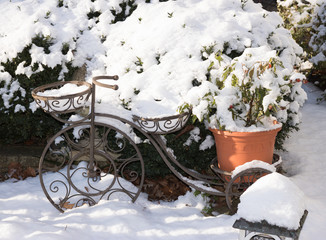 Green plants and flowers under white snow are in a garden. Close-up: a garden stand for flower pots in a shape of bicycle. Garden center in winter time.
