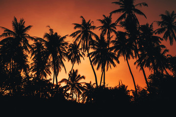 silhouettes of palm trees against an orange red sky in the evening sunset