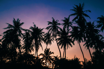 silhouettes of palm trees against a purple blue sky in the evening by the beach