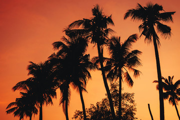 silhouettes of palm trees on the background of an orange warm sky at sunrise on the beach