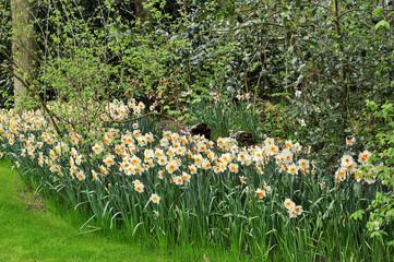 Pormenor de jardim