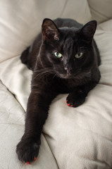 Black Cat Couch