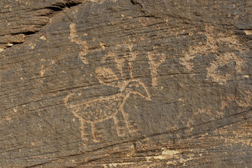 USA, Arizona, animal petroglyph, Homolovi State Park