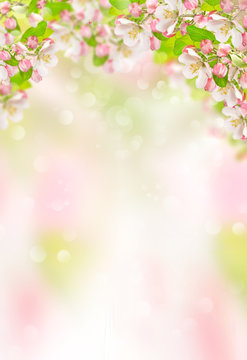Spring flowers Apple tree blossoms nature background