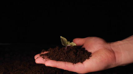 A new life, a man holds in his hand a sprout with leaves in the ground, wet with drops, black background.