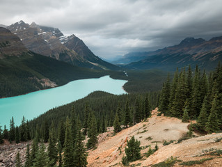 Peyto Lake in Banff Alberta looks like the face of a fox