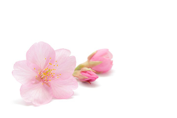 Papiers peints Fleur de cerisier 桜 花 春 背景