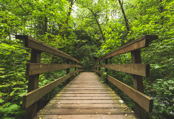 Wooden Bridge in Green Forest